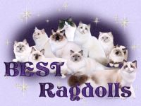 Member - Best Ragdolls