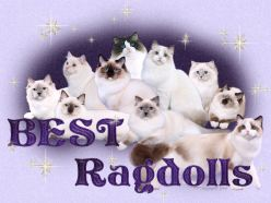 Member - Best Ragdolls California
