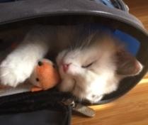 Creekcats kitten